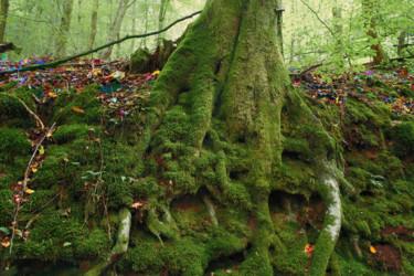 zauberwald-13.jpg